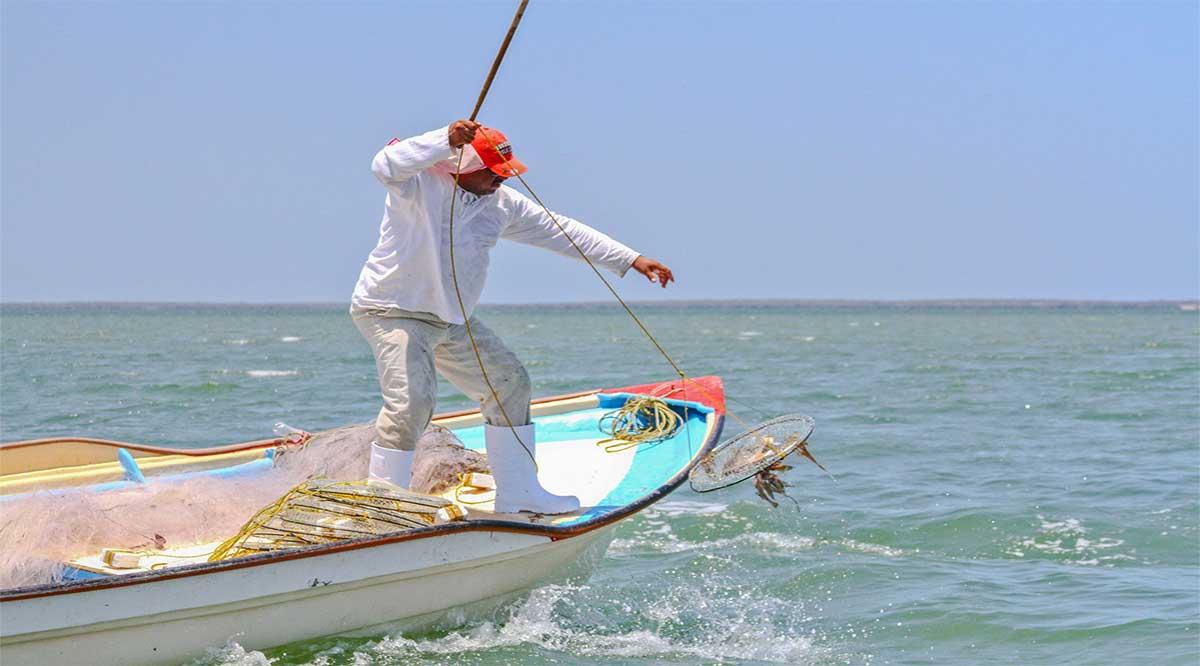 Publican proyecto de modificación de NOM para tallas mínimas de captura de jaiba en el Pacífico y el Golfo de California