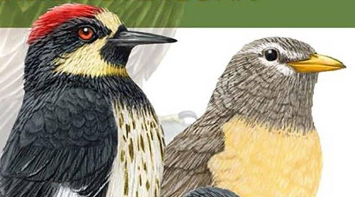Más de 150 especies contiene la Guía de Aves de Sierra la Laguna