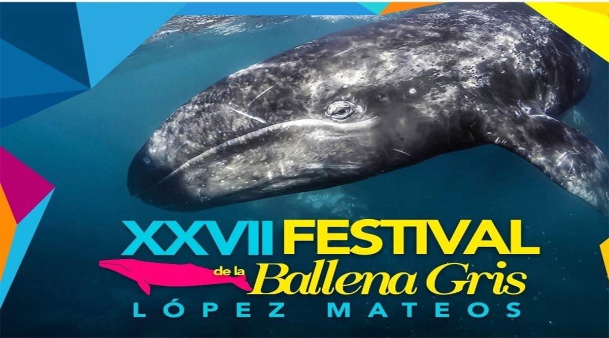 Arranca el 31 de enero el Festival de la Ballena Gris en López Mateos