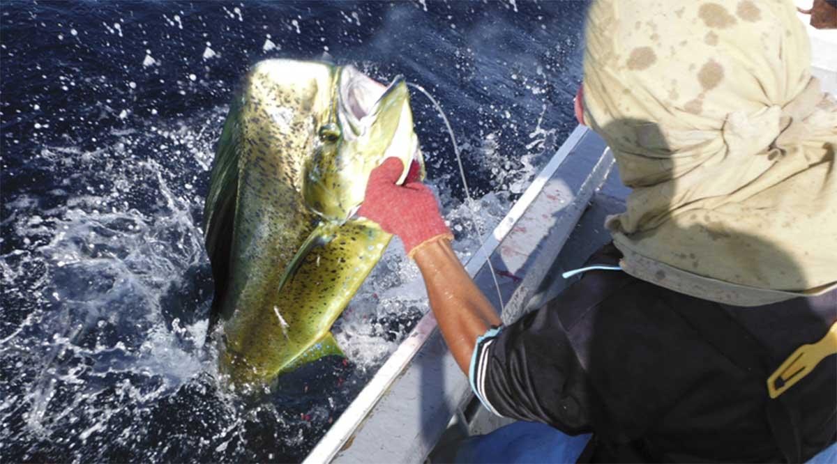 Alertan de nueva amenaza contra pesca  del dorado