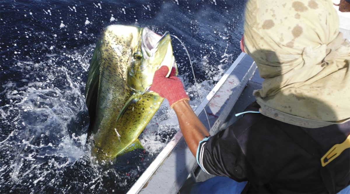 Reitera gobierno de BCS su rotundo rechazo a la liberación del dorado a la pesca comercial