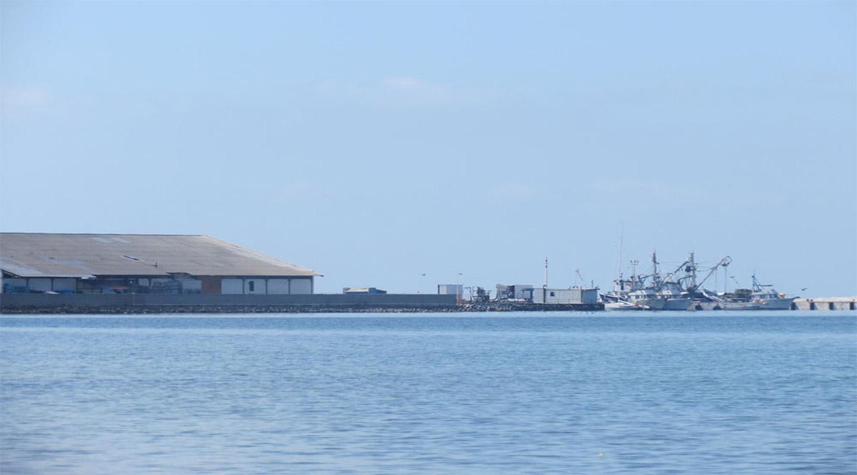 Aumentó en 100% el movimiento de sardina en Puerto San Carlos