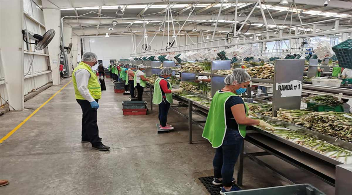 Realizan verificaciones sanitarias en empresas agrícolas de BCS