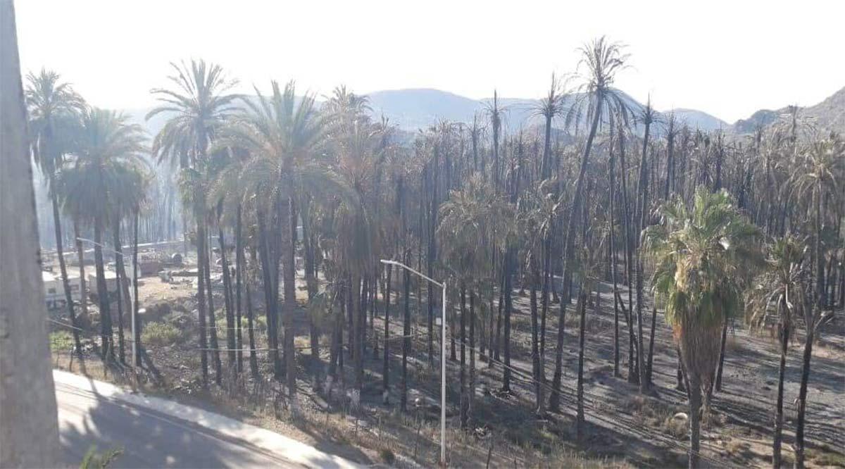 Se siniestraron 10 hectáreas de palmares de la Heroica Mulegé