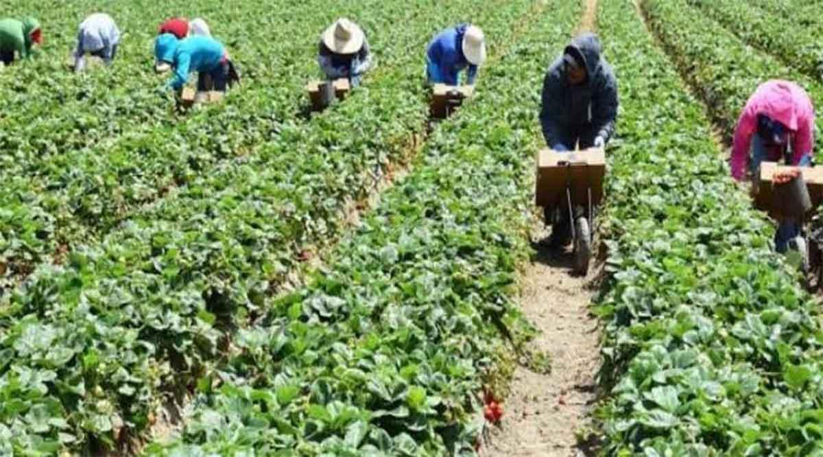 Verifican campos agrícolas de Mulegé sobre sus protocolos para prevenir el Covid