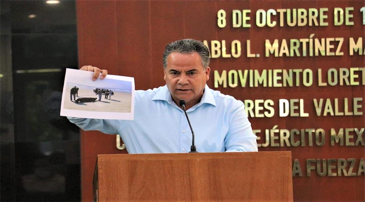 Pide diputado Ruíz intervención de Profepa y Conanp para que investiguen la muerte de 170 lobos marinos