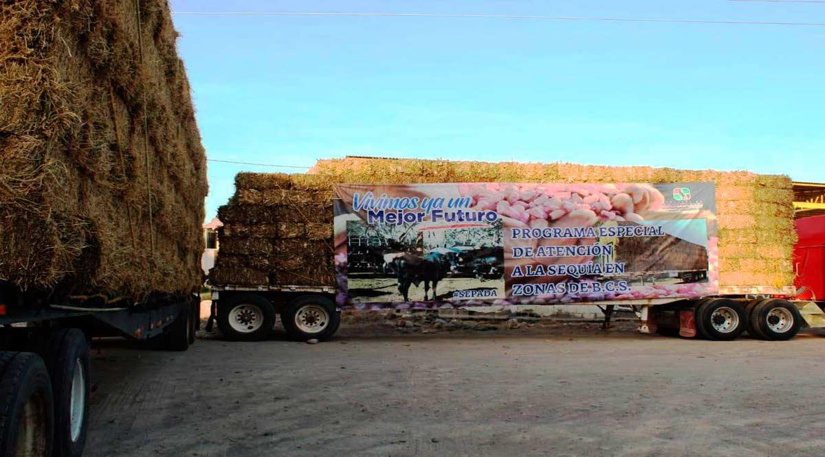 Apoya Gobierno de BCS a ganaderos para atender la sequía