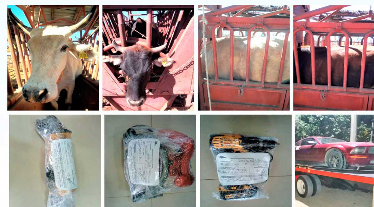 Recuperan ganado, aseguran un vehículo y aprehenden a una persona en BCS
