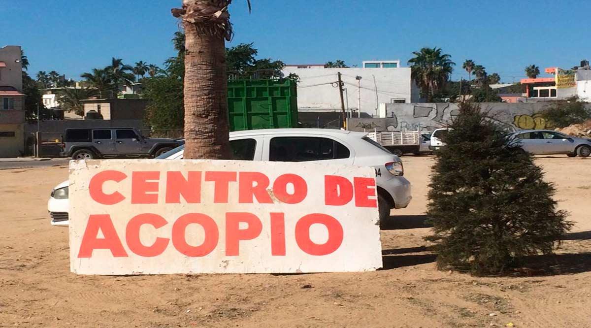 Se mantienen abiertos los Centros de Acopio de árboles navideños en Los Cabos