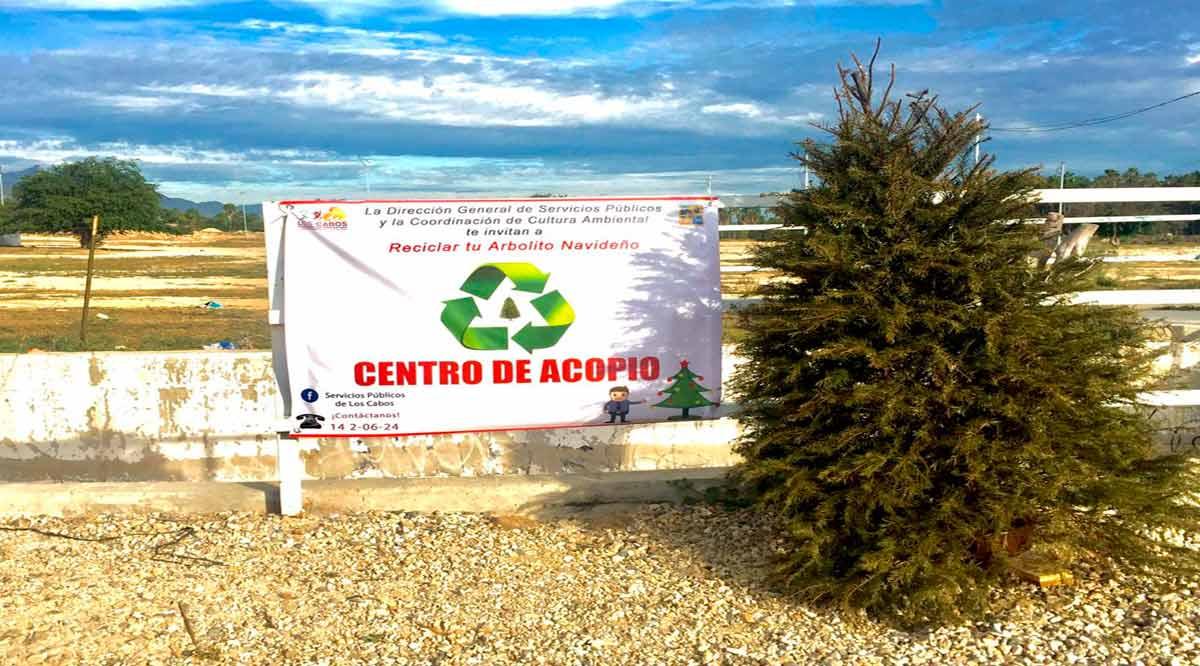 Instalarán Centros de Acopio en Los Cabos para los árboles de Navidad naturales