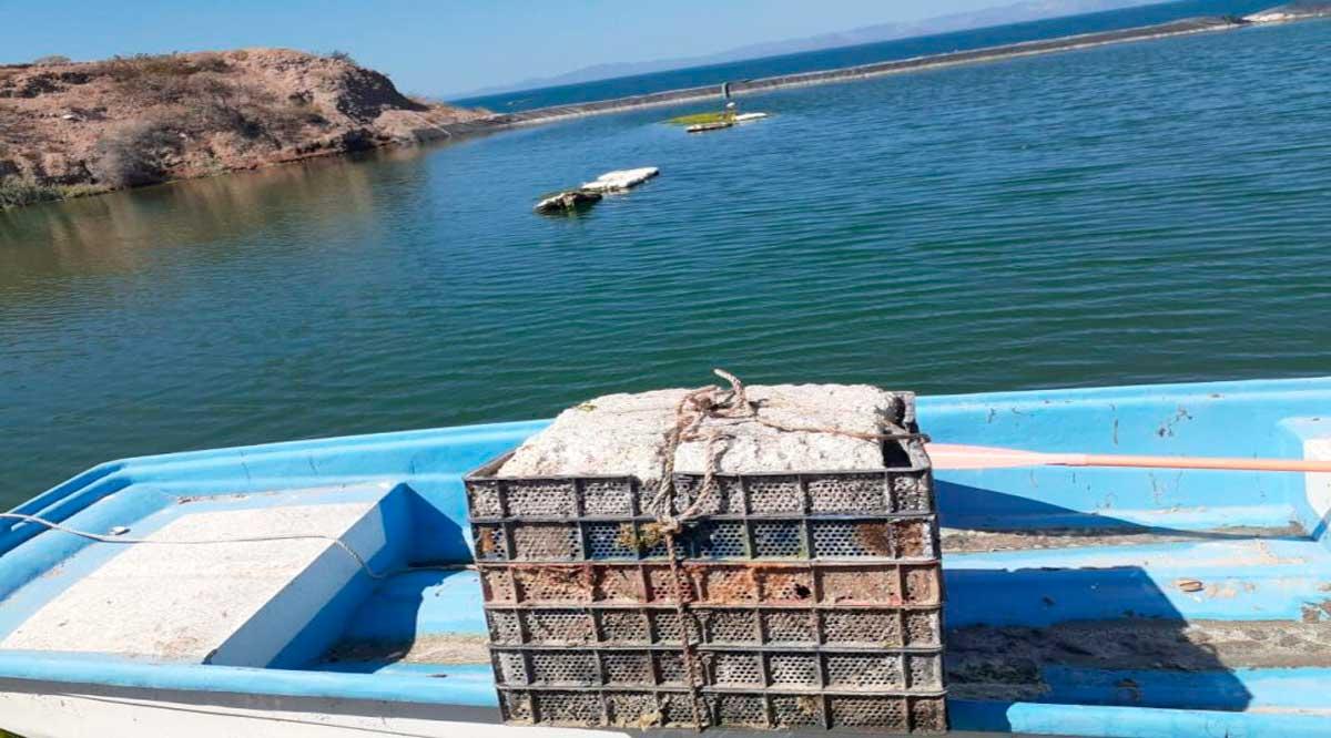 Ha invertido el gobierno de BCS más de 22 millones de pesos en apoyo de más de mil proyectos acuícolas