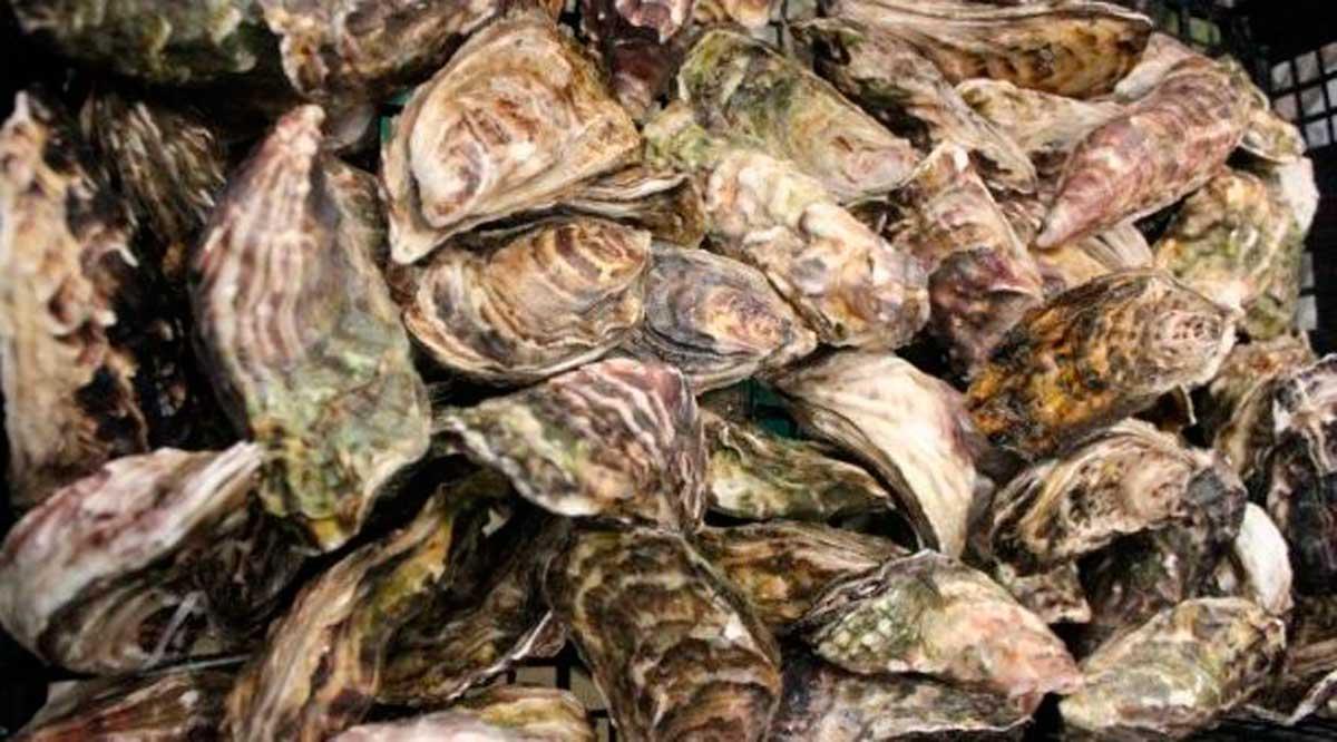 Entregan apoyos a productores acuícolas de Comondú
