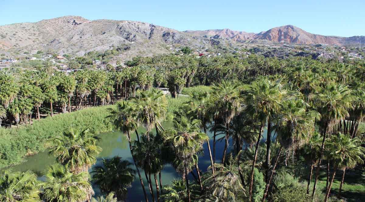Se han invertido 13 mdp en rehabilitar 6 oasis de BCS