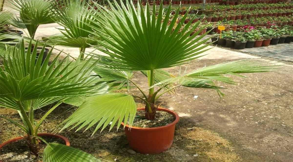Han reforestado ciudadanos 10 mil plantas en BCS