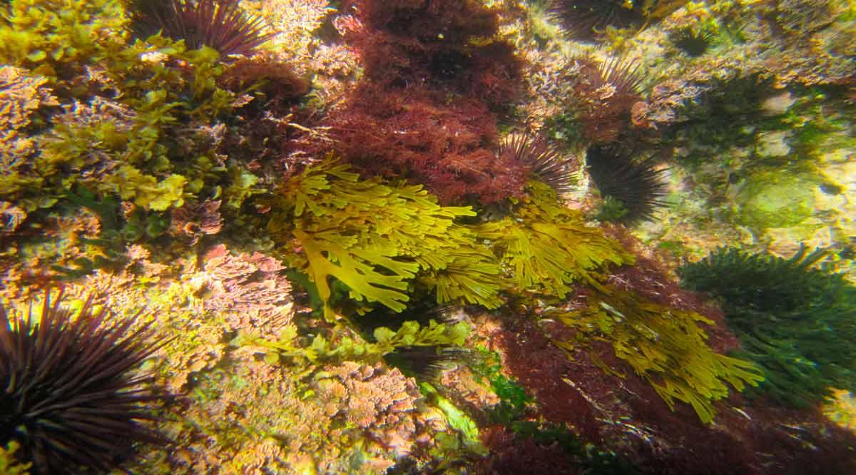 Ofrecen las algas servicios ecosistémicos