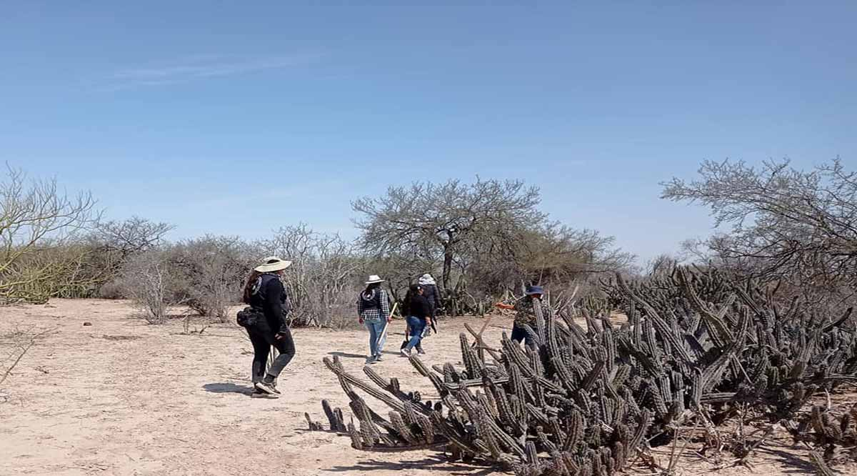 Encuentran hallazgos al parecer de restos humanos en Comondú