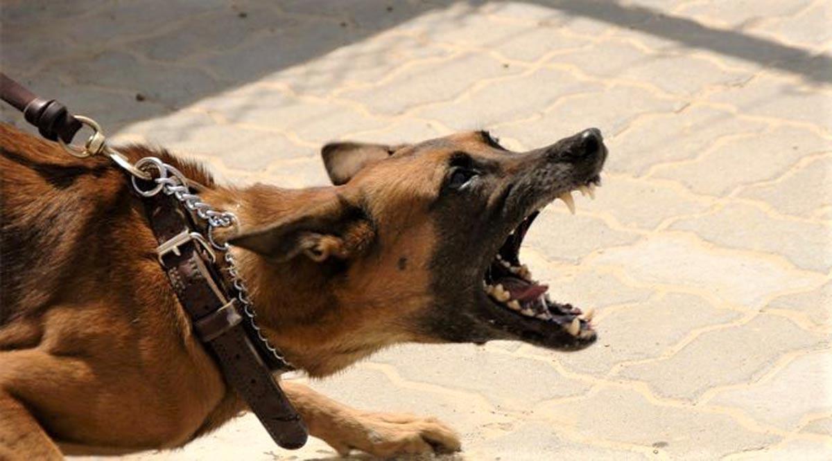 Sentencian a dueños de un perro que causó lesiones a un menor en La Paz
