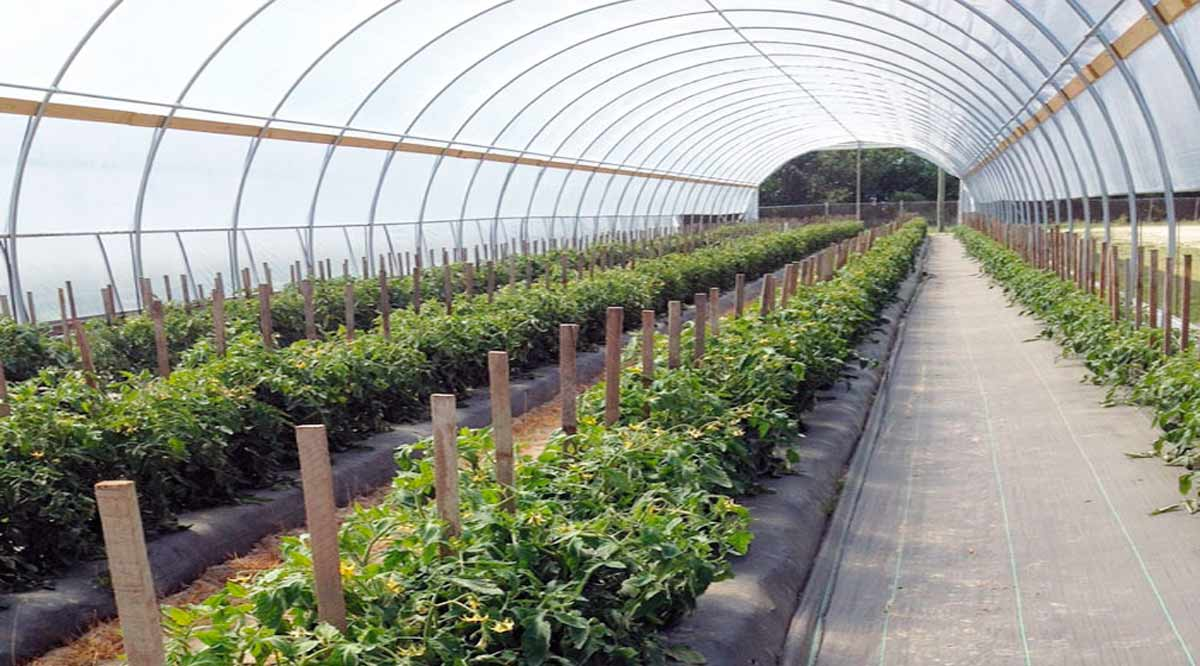 Tiene BCS más de 35 mil hectáreas de diferentes cultivos con un valor de producción superior a los 5 mmp