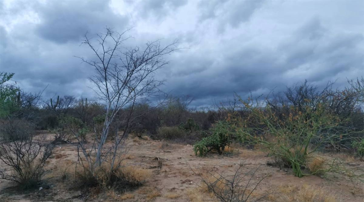 """No fueron las lluvias pronosticadas las que dejó """"Pamela"""" en BCS"""